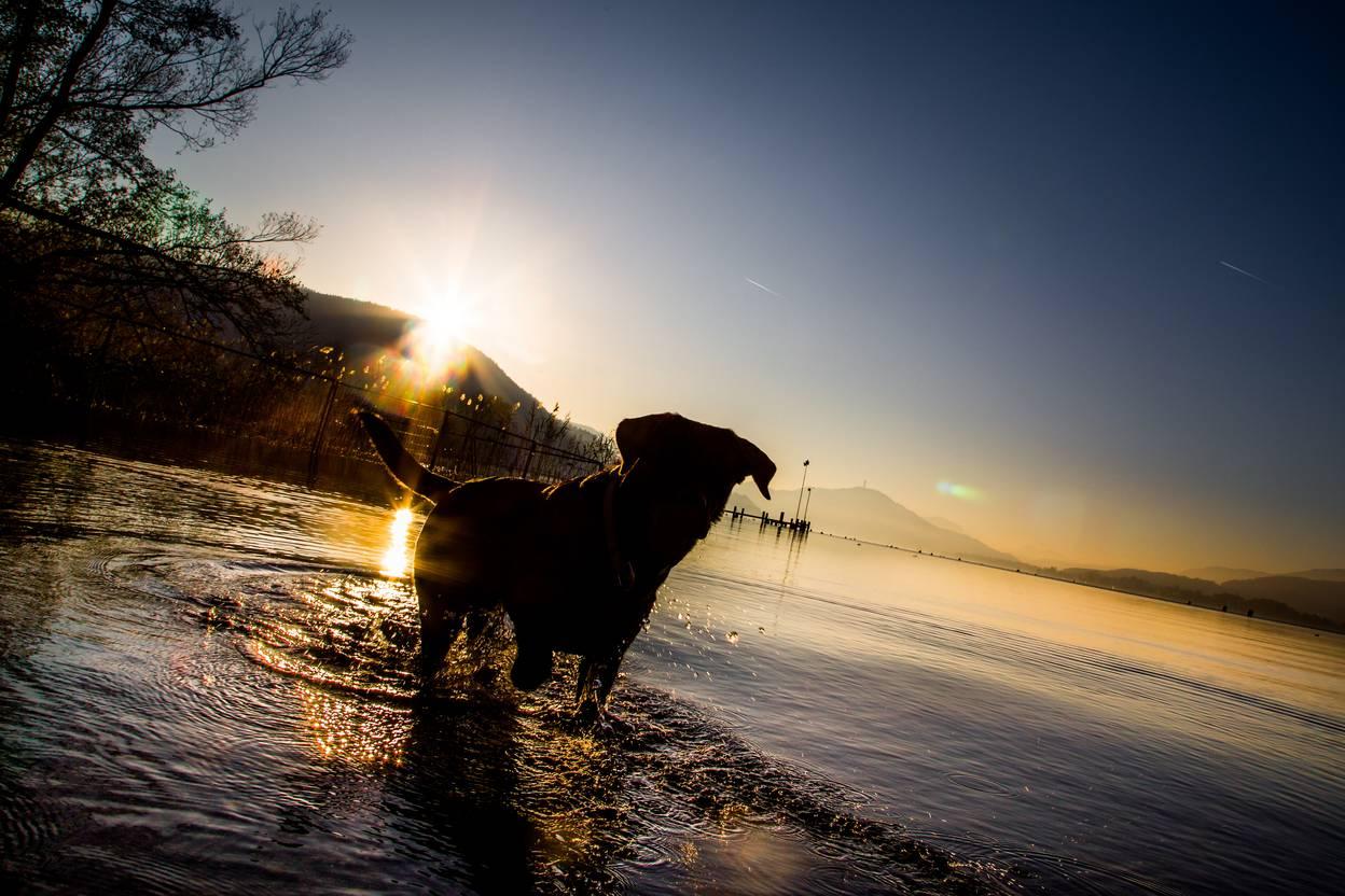 Baden mit Hund in Klagenfurt