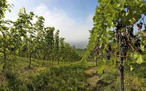 Wein aus Kärnten